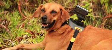 Köpeğinizin rahat etmesi için tasarlandı