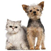 Evcil hayvan tüyleri için uygun